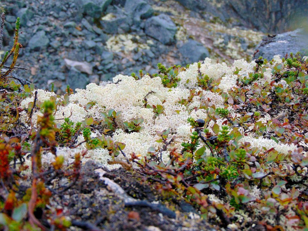 Tormented Valley Yukon Skagway / Alaska
