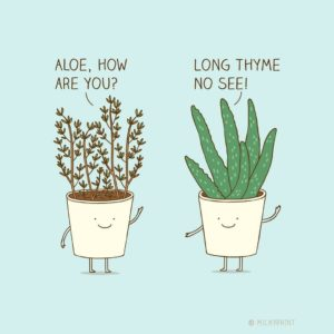 Plant joke photo - how to be positive and happier this winter