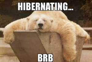 Bear Hibernating - how to be positive and happier this winter